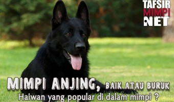 Mimpi Anjing Dalam Islam dan Pelbagai Tafsiran Lain