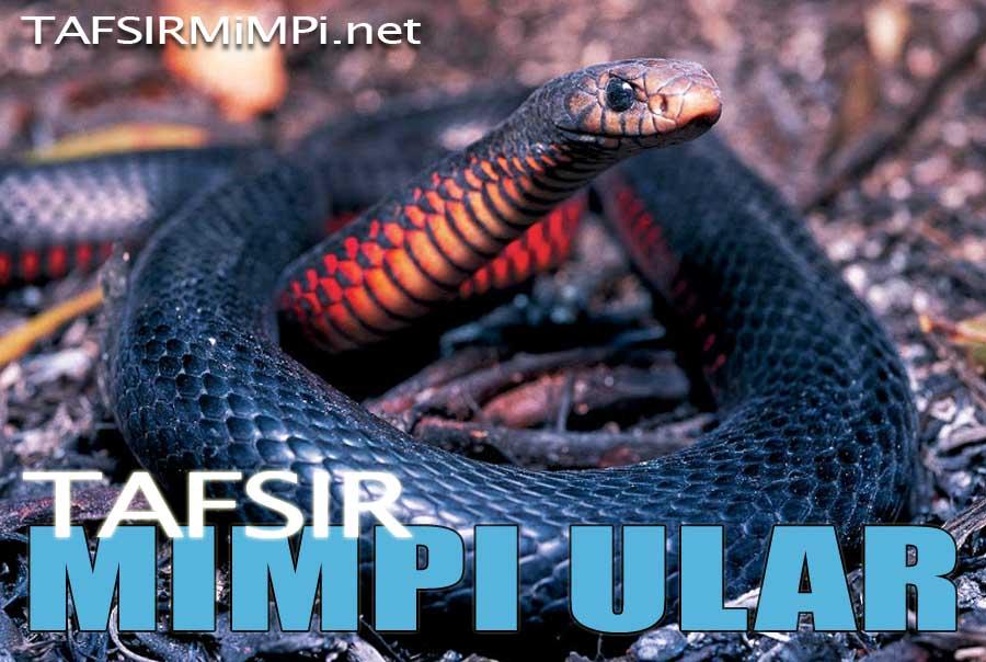 tafsir mimpi ular